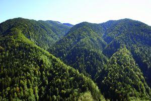 """La folta vegetazione della riserva (il """"Guald"""" di fronte a Comologno)"""