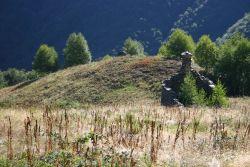 Pascolo abbandonato con avanzamento della vegetazione arbustiva: il bosco riprende il sopravvento, ma una moltitudine di organismi specializzati va scomparendo...